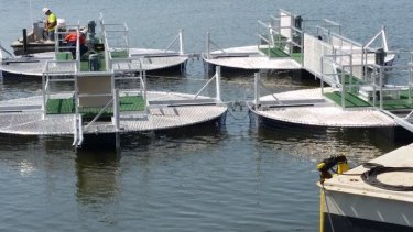 The pontoons that will support the impellers.