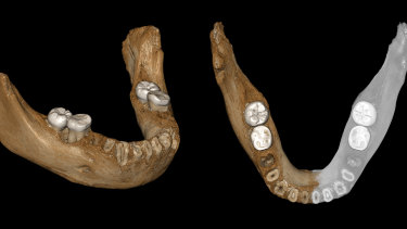 Two views of a virtual reconstruction of the Xiahe mandible believed to belong to a Denisovan, a relative of Neanderthals.