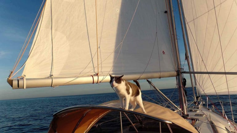Staff from the NZ Ministry for Primary Industries have taken the 18-month-old feline to a temporary quarantine location while the Alizes II, which came into Careys Bay near the town of Dunedin on Sunday, gets its hull fixed.