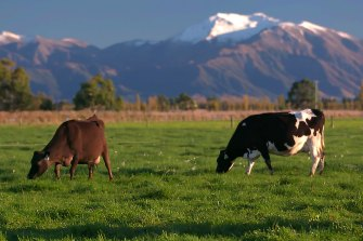 With Australia's ongoing trade stoush with China threatening its exports, a2 Milk is emphasising its New Zealand heritage.