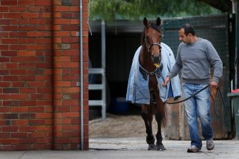 Saab Hasan with one of his horses, Shoreham, at Flemington in 2014.