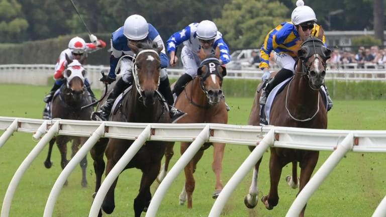Rails run: Campari wins at Randwick on Melbourne Cup day.