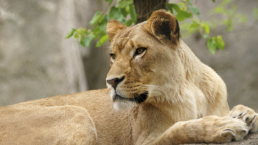 Zuri, attacked male Nyack in their outdoor yard.