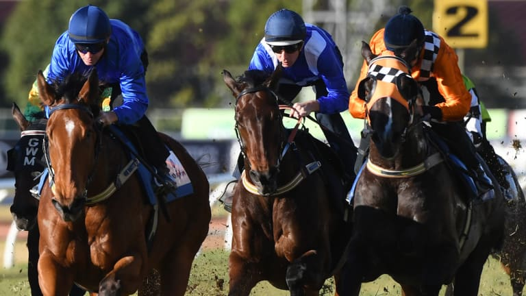 At her best: Winx drives through between Alizee and Ace High for third in what jockey Hugh Bowman described as her best ever barrier trial at Rosehill on Tuesday.