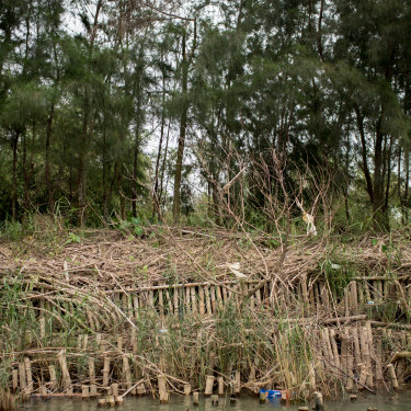 Remnants of An Nhien farm's natural embankment damaged by last year's floods in Triem Tay village. The embankment, designed by Dr Dao Ngo, consisting of three layers of indigenous trees and bamboo biologs.