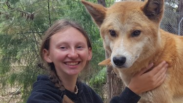 Chloe Gardner with dingo 'Mungka' at the Bargo Dingo Sanctuary.