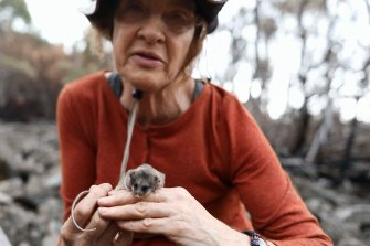 Linda Broome, a mountain pygmy possum expert with the NSW government with one of the endangered marsupials.