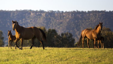 Concern: The Hunter Valley has recorded its first case of Hendra virus.