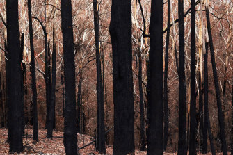 Photographer Sarah Ducker found beauty in the burnt forest.