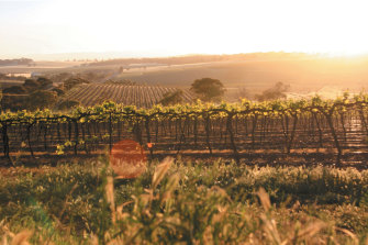 Taylors in South Australia's  Clare Valley offers cabernet sauvignon in the hearty Clare style.