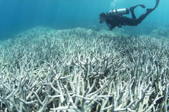 Marian Wilkinson's book examines how Australia has failed to produce a meaningful climate policy to help deal with such problems as coral bleaching.