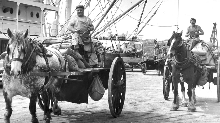 Clydesdale horses moving sacks of raw sugar from the wharves at Pyrmont to the nearby CSR refinery.