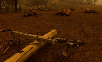 Tens of thousands of livestock have perished in the bushfires.