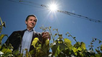 Domaine Chandon CEO Tony Jordan in his Yarra Valley vineyard.