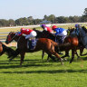 Well-bred youngsters take first step at Hawkesbury