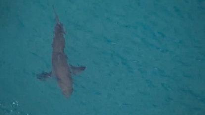 Man bitten in the leg by shark in WA's north-west