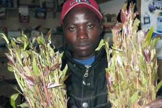 A young Kenyan holds bundles of miraa in a small kiosk, in Nairobi, Kenya.