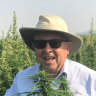 """Barry Lambert in a hemp plantation in Tasmania: """"Hemp is as safe – and natural – as broccoli or orange juice,"""" he says."""