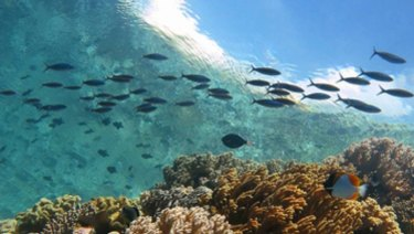 Wakatobi is the name of an island and regency located in an area of Sulawesi Tenggara Province.