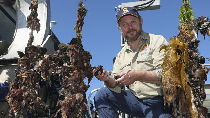 East coast mussel lovers gain access to yesterday's haul