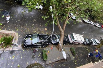 A tree fell in Victoria Street in Potts Point just after 3pm, causing a suspected gas leak and forcing residents to evacuate.
