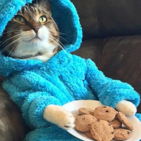 US embassy issues apology after cat pyjama invite