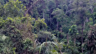 New research from UQ and CSIRO has found wilderness areas halve the extinction risk for species in them compared to other habitat areas.
