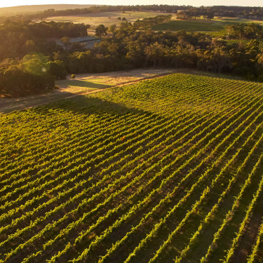 The next generation of wines from the South West are different and delicious