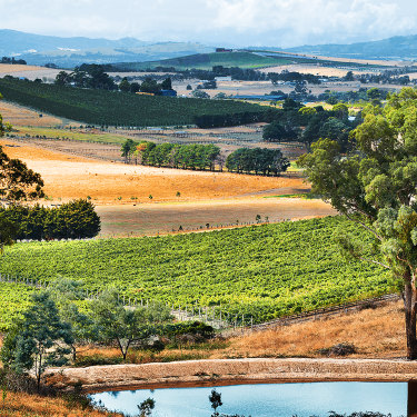 Handpicked, on Victoria's Mornington Peninsula, has emerged as a pinot noir and chardonnay specialist.