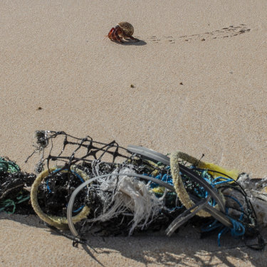 A crab walks past a fish aggregation device that has washed up on Henderson Island.