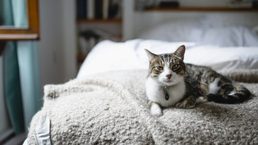 Know the signs of joint issues in your cat.
