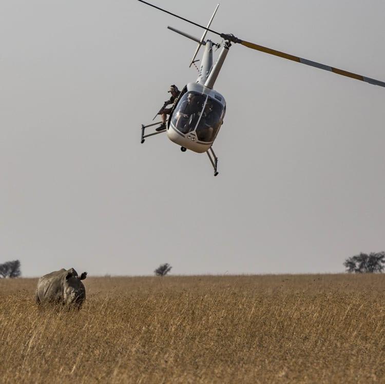 A vet prepares to tranquillise a rhino.