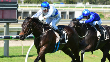 Unbeaten: the flying Zoustyle faces a tough challenge in Brisbane.