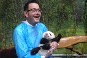 Daniel Andrews visiting pandas during his 2015 China trip.