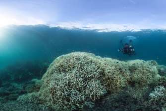 Coral bleaching near Lizard Island on the Great Barrier Reef during 2016.