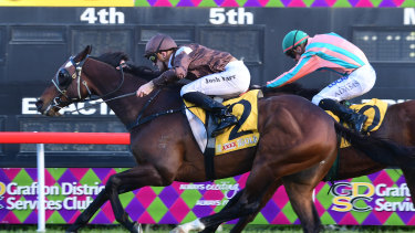 In the purple: Racing returns to the Jacaranda City today with a nine-race card.
