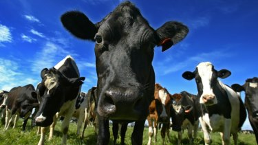 A British farmer is using cow manure to help scour the digital sphere for coins.