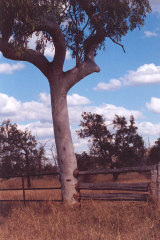 The fence near Cloncurry, Queensland.