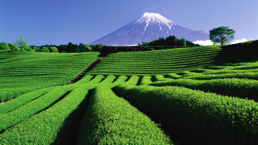 The tea plantations of Shizuoka, with Mt Fuji in the background.