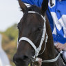 Winx to be a mum - but owners likely to hang on to offspring