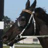 Race-by-race tips and preview for Dubbo on Friday