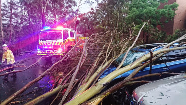 The storm brought trees crashing to the ground and damaged power lines around Hornsby and Baulkham Hills.