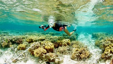 "SCU researcher Kay Davis swimming over the reef at One Tree Island, which has experienced ""remarkable"" recovery."