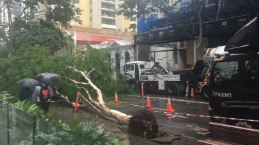 A fallen tree has closed Mary Street between Albert Street and Edward Street.