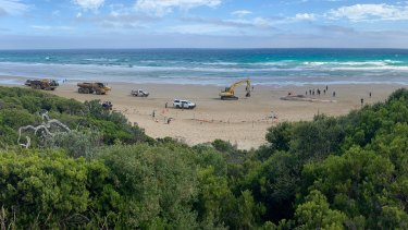 Heavy machinery at Fairhaven beach on Wednesday as crews work to remove the 65-tonne whale carcass.
