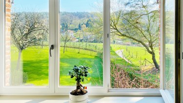 Green fields seen from a window in Belgium, highlighted by a bonsai plant.