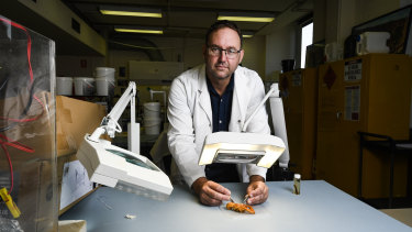 Professor Ross Thompson inspects a yabby at the University of Canberra.