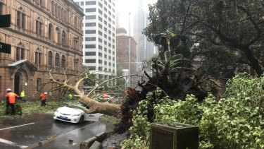 A tree fell in Bridge Street just before 1.30pm, crushing a car.
