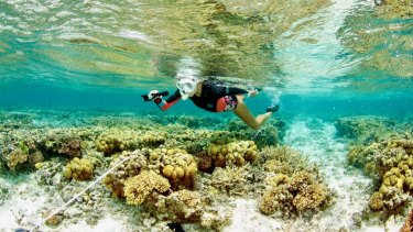 """SCU researcher Kay Davis swimming over the reef at One Tree Island, which has experienced """"remarkable"""" recovery."""