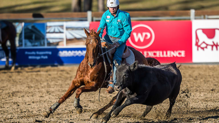 Canberra rider Steve Hart competes on God's Little Acre at the World Championship Gold Buckle Campdraft.